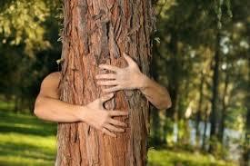Image result for TREE HUGGER
